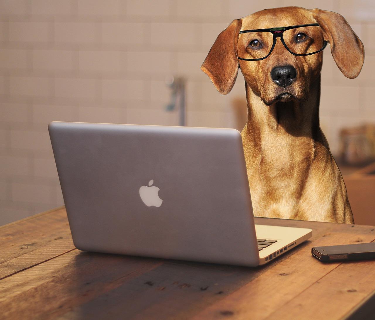 Quels sont les laptops les plus performants du moment?